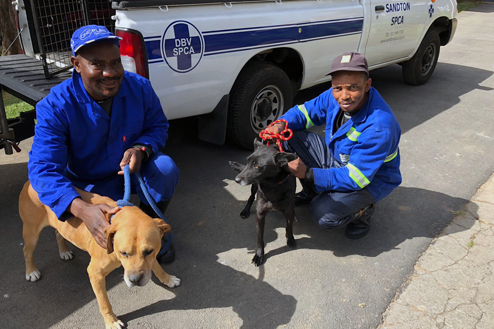 40 Dogs Sterilised in Cooperation with Sandton SPCA